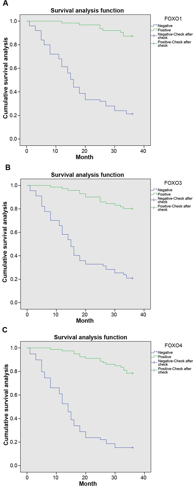 The Kaplan-Meier curve of associations between expression of FOXOs and survival time of patients with bladder cancer.