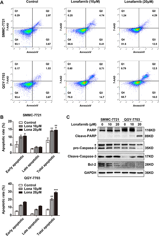 Lonafarnib induces apoptosis in HCC cells.