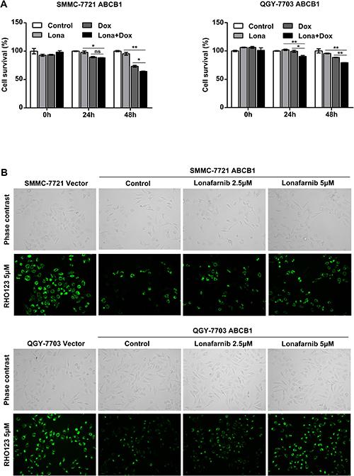 Lonafarnib reduces ABCB1-mediated chemoresistance in HCC cells.