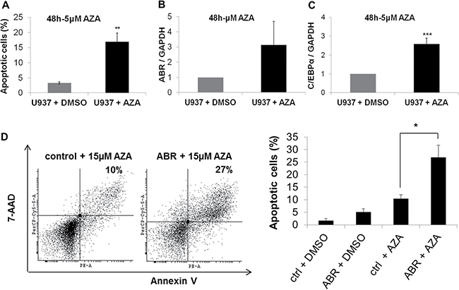 ABR overexpression enhances azacitidine-induced apoptosis.