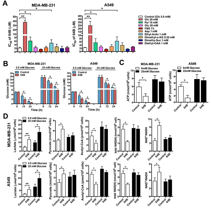64B alters glucose metabolism and depletes ATP in tumor cells.