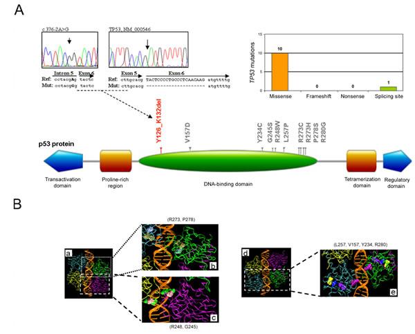 Molecular profile of the