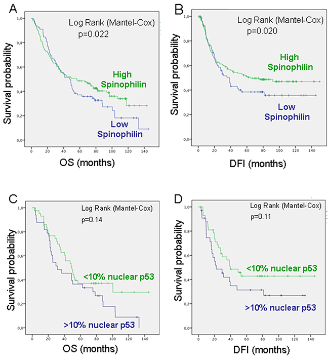 Survival probability of patients with lung cancer according to Spinophilin levels.