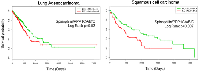 Survival probability of patients with lung cancer according to the joint mRNA levels of the catalytic subunits of PP1 and Spinophilin.