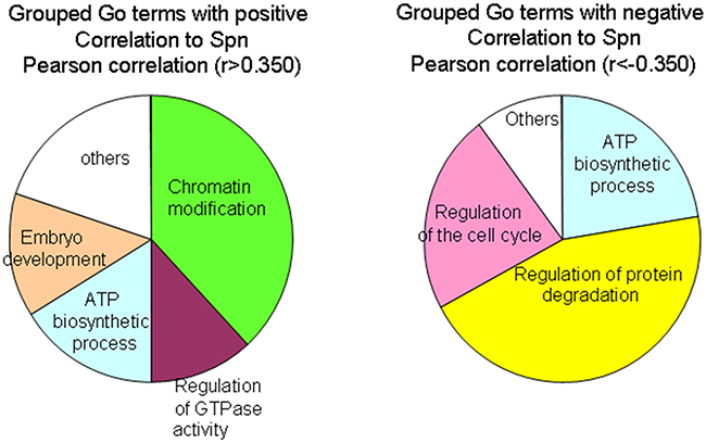 GO term enrichment by genes that correlate positively or negatively to Spinophilin levels.
