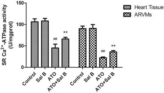 Effect of Sal B on SERCA activity after ATO treatment in heart tissue and ARVM.