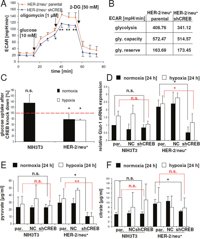 CREB-mediated regulation of glucose uptake by Glut-1 expression and glycolysis.