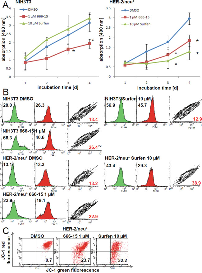 Inhibition of the mitochondrial activity and increased amount of dysfunctional mitochondria by CREB inhibitors 666-15 and surfen.