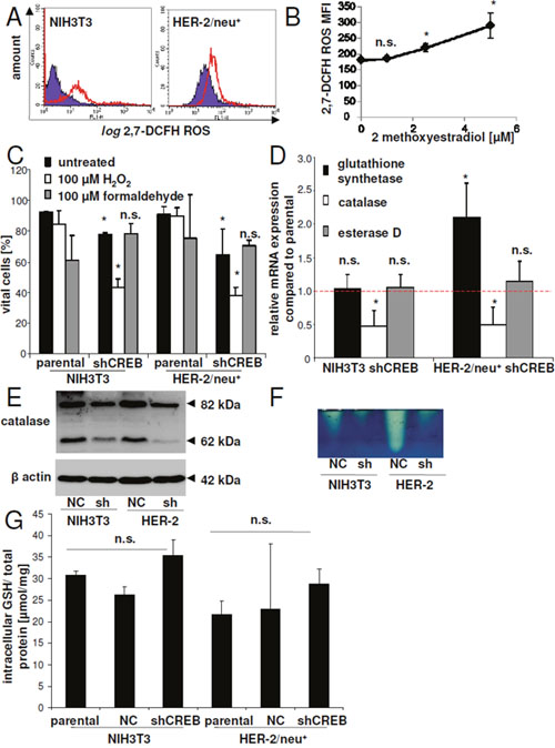 Regulation of detoxification enzymes by CREB.