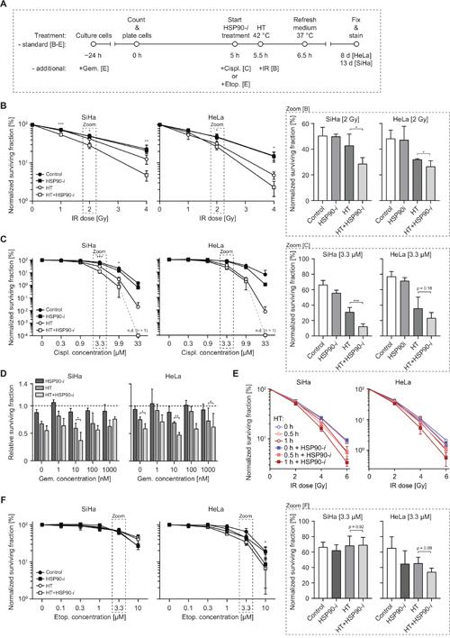 Inhibition of HSP90 enhances radiosensitizing and chemosensitizing effects of hyperthermia (HT).