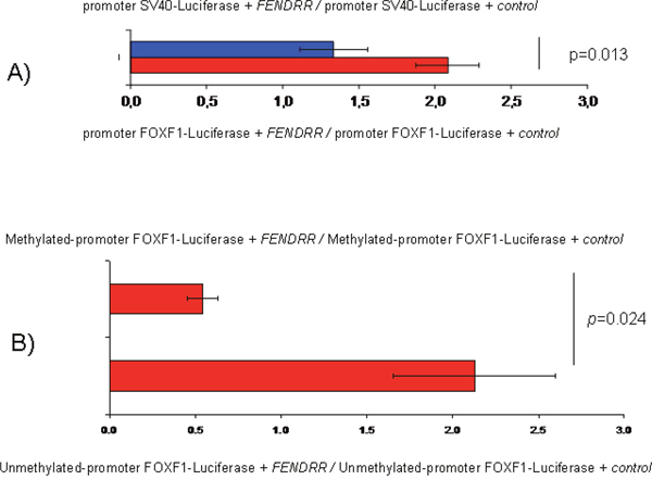 FENDRR and FOXF1 relationship determined by luciferase assays in the A549 cell line.