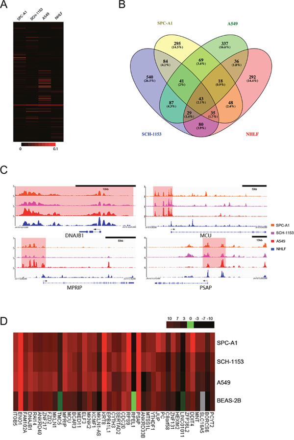 The H3K27ac enrichment differences, SE distribution, ChIP-seq binding profiles and associated genes' expression in 4 cell lines.