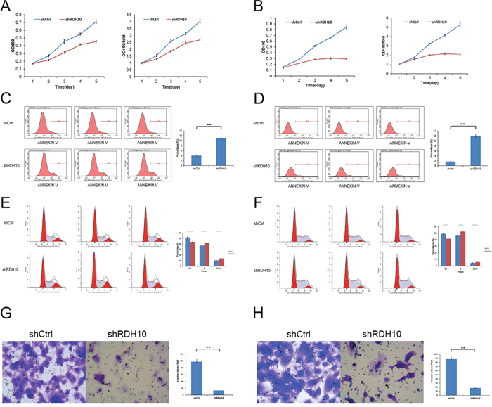 RDH10 is essential for glioma cell proliferation, survival and invasion.