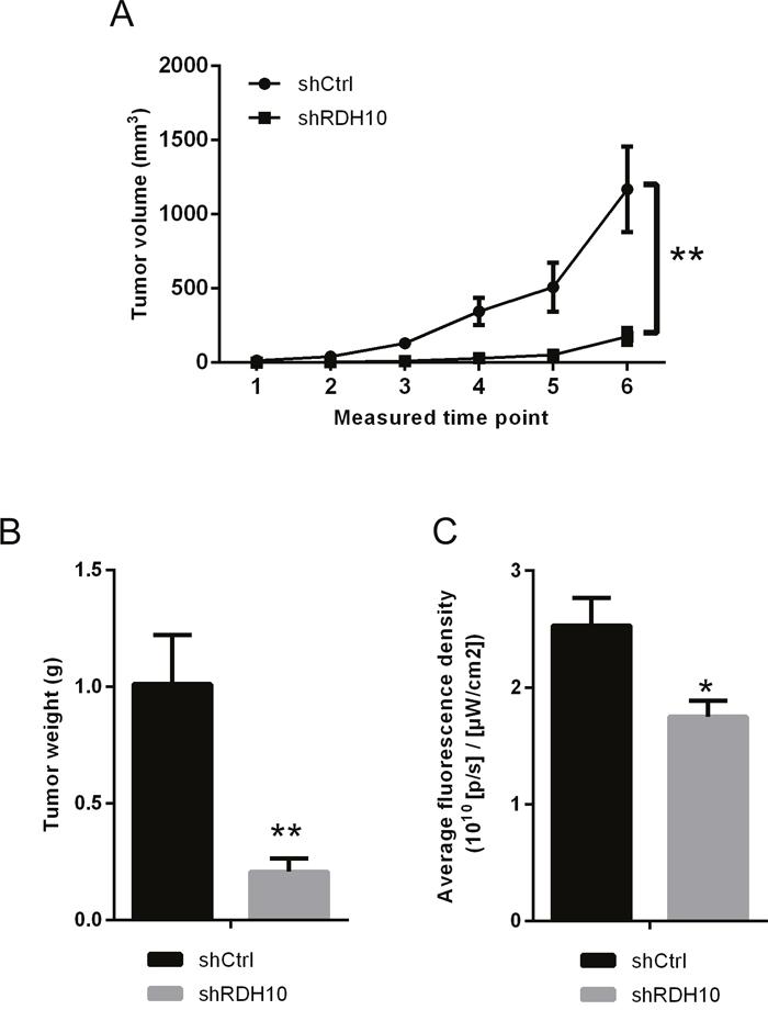 in vivo xenograft models confirmed the effect RDH10 on tumorigenicity.