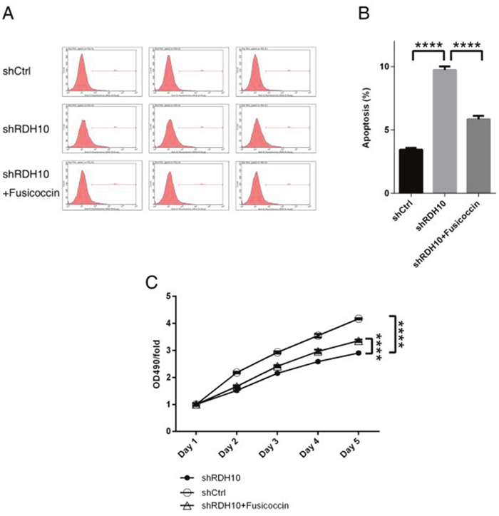 NF-κB agonist rescued abnormal cellular apoptosis and proliferation induced by RDH10 knockdown in U-87 cells.