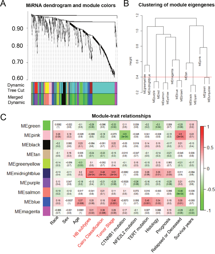 The WGCNA analysis of the malignant phenotype-associated miRNAs.