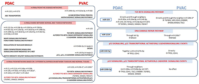 Main signalling pathways, together with miRNAs and respective target genes, emerged from microRNA co-expression networks in pancreatic ductal adenocarcinoma (PDAC) compared to Vater's papilla adenocarcinoma (PVAC).