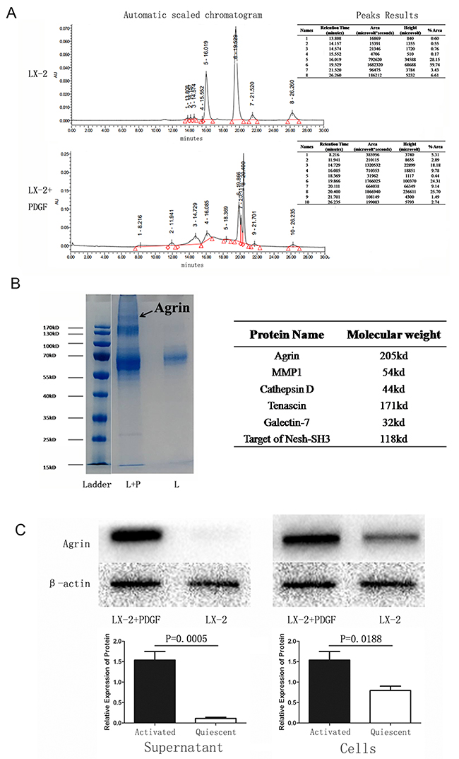 Identification and detection of proteins in the supernatant of quiescent versus PDGF-activated LX-2 cells.