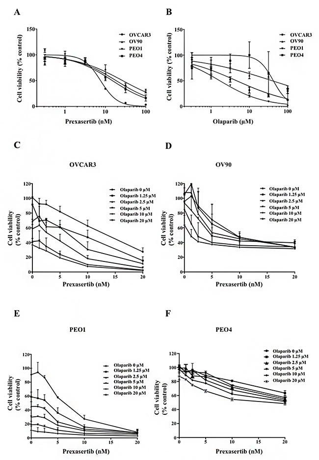 Chk1 and PARP inhibition reduces cell viability in HGSOC.