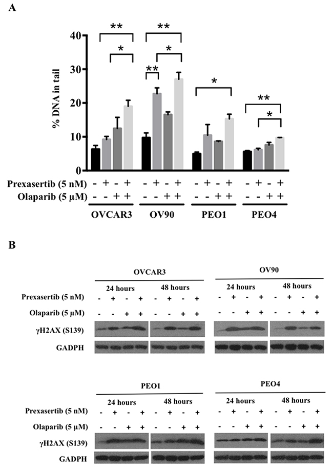 Prexasertib and olaparib cause DNA damage in HGSOC cells.