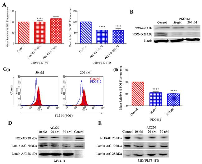 Inhibition of the FLT3 receptor in 32D/FLT3-ITD cells and FLT3-ITD expressing MV4-11 cells reduces NOX4 67 kDa and NOX4D 28 kDa protein expression and total endogenous H2O2.