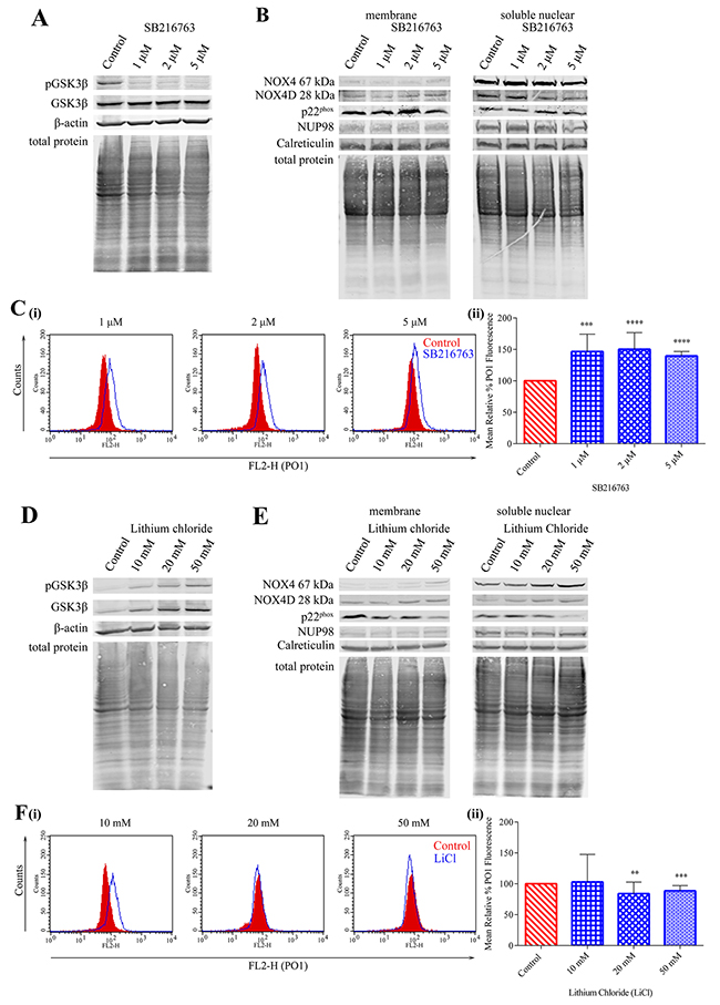 Inhibition of GSK3β signalling results in elevated NOX4 67 kDa and NOX4D 28 kDa protein expression.