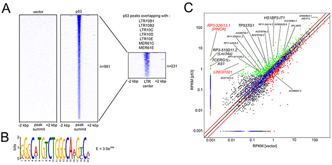 Identification of ERV1 LTR elements within promoters of p53-inducible lncRNAs.
