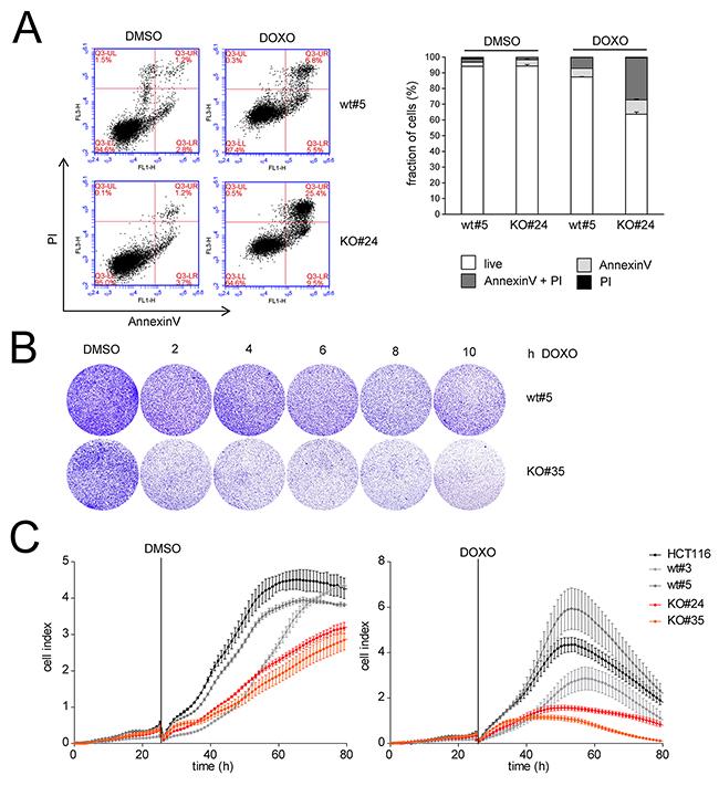 LINC01021 inactivation sensitizes to doxorubicin.