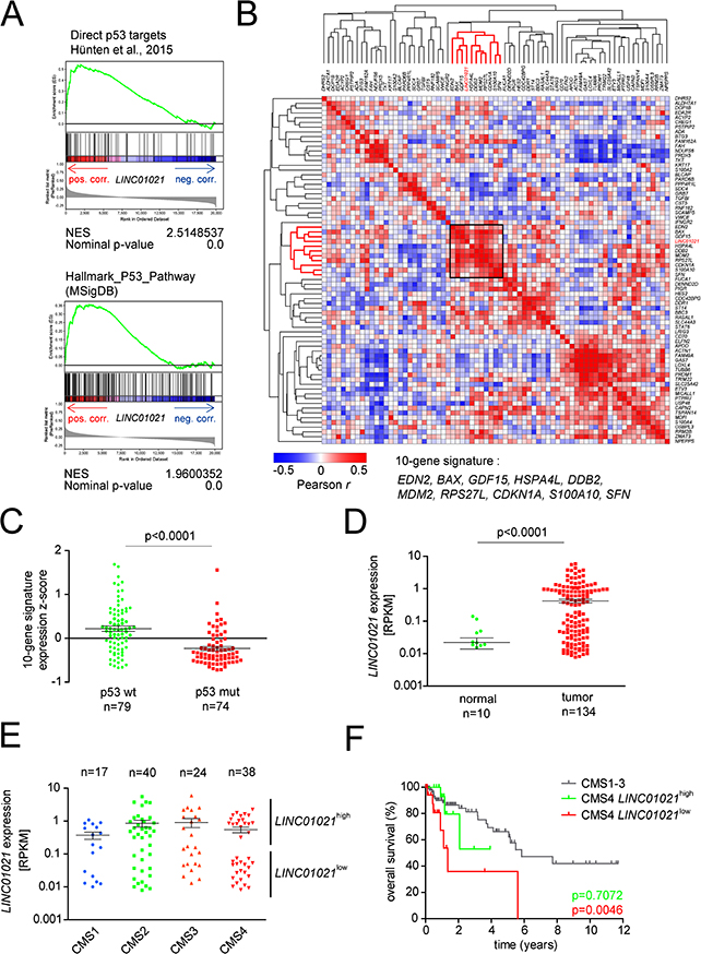 Assocation of LINC01021 expression with wild-type p53 associated expression signatures and clinical outcome of CRC subtypes.