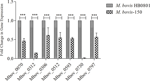 Verification of down-regulated proteins in the attenuated strain M. bovis-150.