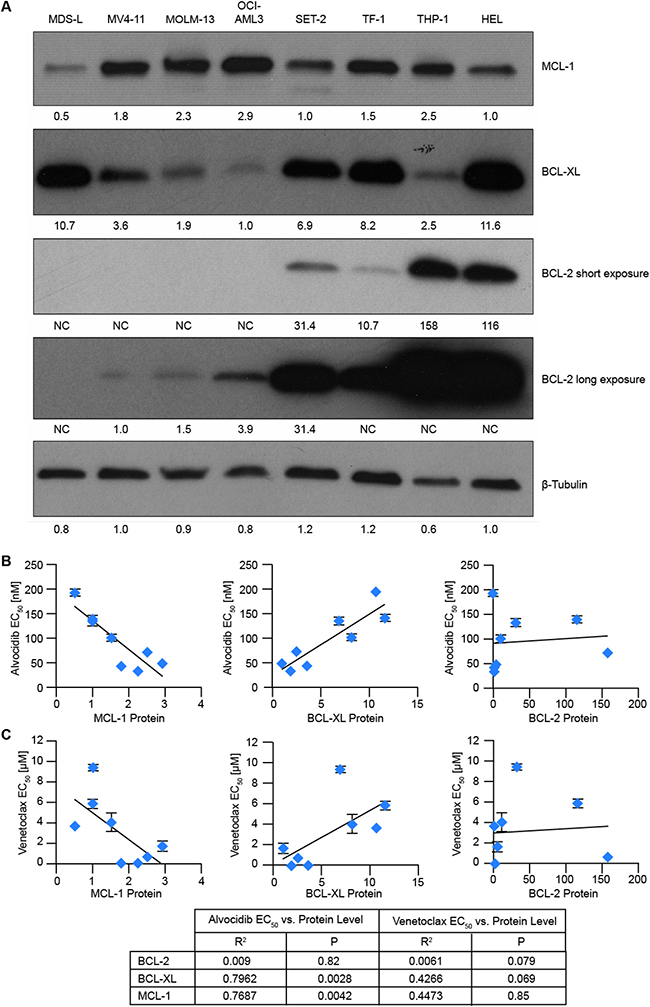 Correlation of BCL-2 family proteins with alvocidib and venetoclax activity.
