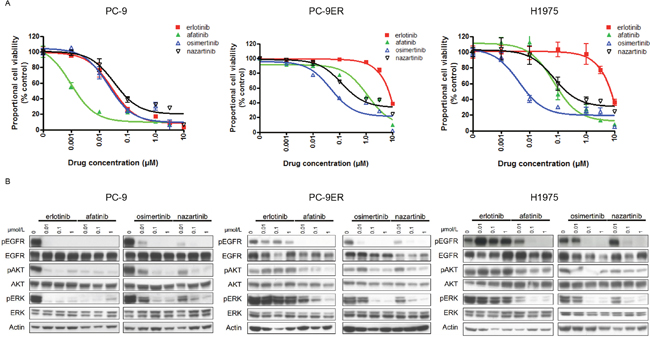 The sensitivities of lung cancer cell lines to EGFR-TKIs.