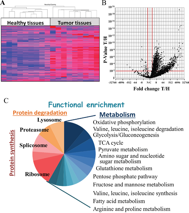 Oncotarget   A molecular signature of lung cancer: potential