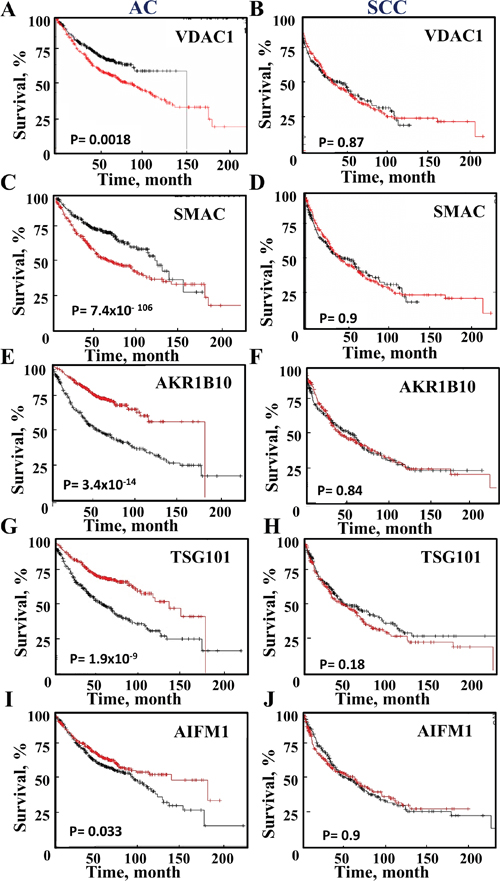 Survival of AC and SCC patients and the expression levels of selected proteins.