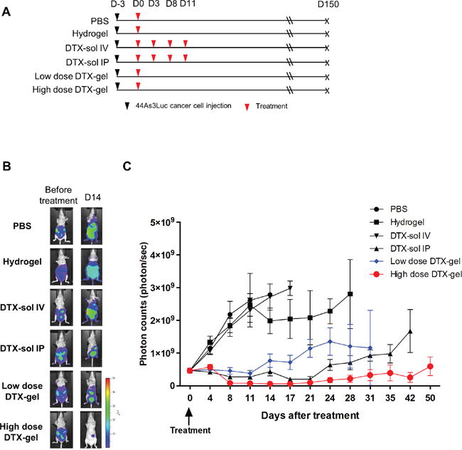 Analysis of in vivo bioluminescence imaging in peritoneal carcinomatosis (PC) mouse model.