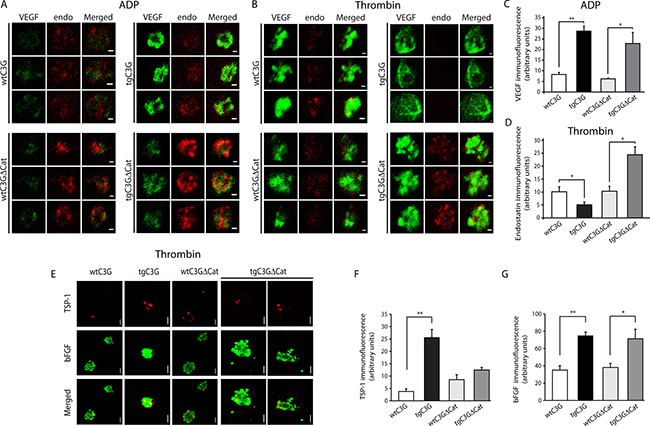 C3G regulates the release of VEGF, bFGF, endostatin and TSP-1 from ADP- and thrombin-stimulated platelets.