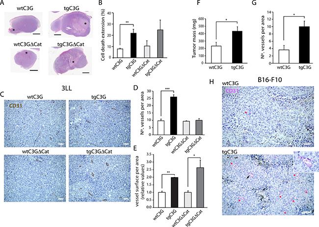 Platelet C3G regulates in vivo angiogenesis: Heterotopic tumors display enhanced growth in transgenic mice.