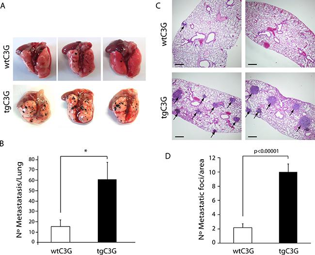 Platelet C3G favors melanoma metastasis.