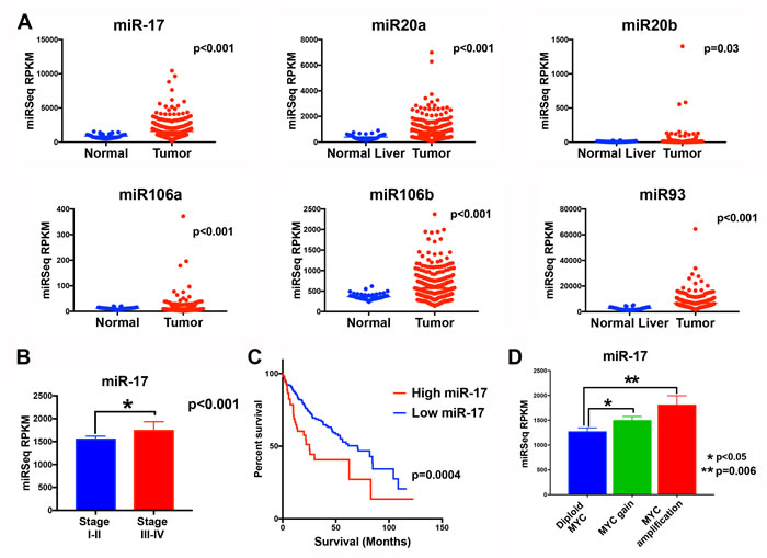 The miR-17 family is overexpressed in MYC-driven human HCC tumors.