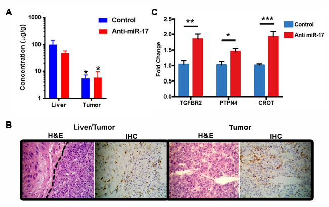 Lipid nanoparticle anti-miR-17 was effectively delivered to the liver.