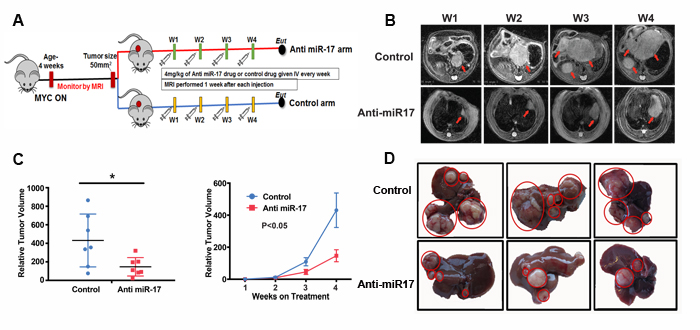 Anti-miR-17 therapy impeded MYC-driven tumorigenesis.