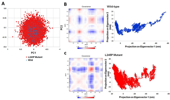 Dynamical effects of the p. L245P mutation on the PROM1 protein