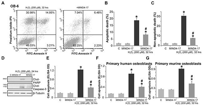 MIND4-17 inhibits H2O2-induced apoptotic and non-apoptotic cell death of osteoblasts.
