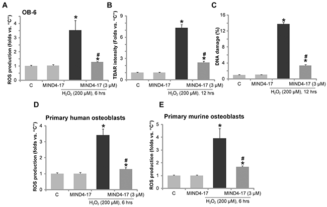 MIND4-17 alleviates H2O2-induced oxidative stress in osteoblasts.