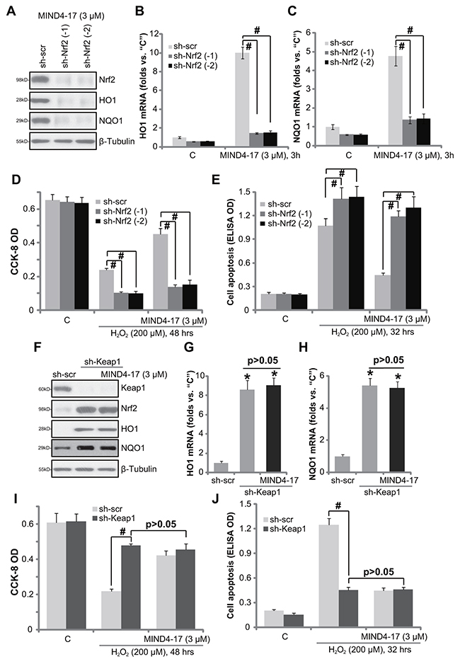 Nrf2 activation is required for MIND4-17-mediated cytoprotection.