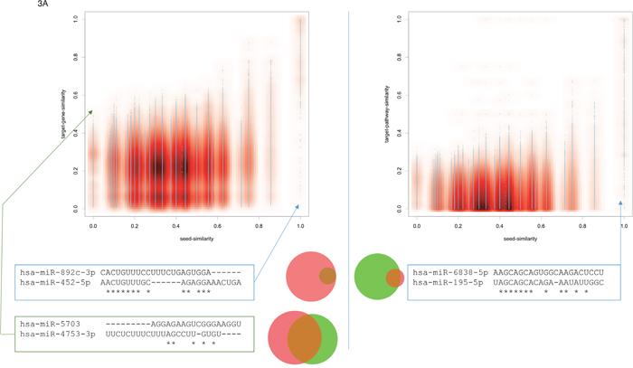 Oncotarget | About miRNAs, miRNA seeds, target genes and