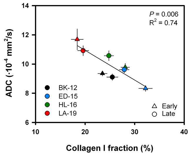ADC versus collagen I fraction.