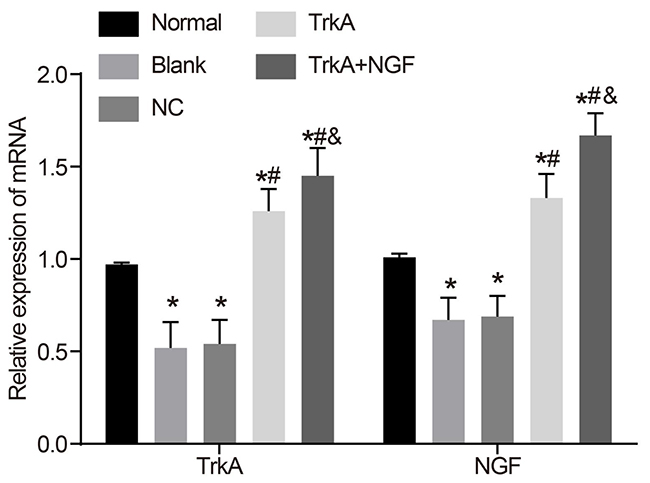 mRNA expressions of NGF and TrkA in rat penile corpus cavernosum.