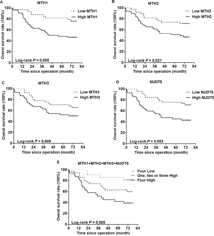 Kaplan-Meier curves for the overall survival rate of CRC patients.