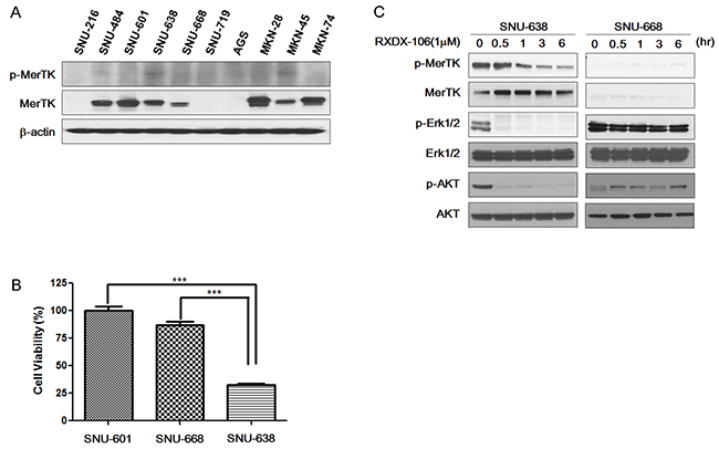 The effect of RXDX-106 in gastric cancer cell lines.
